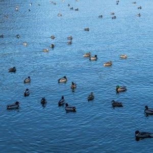 袖ヶ浦公園に渡り鳥が飛来しました